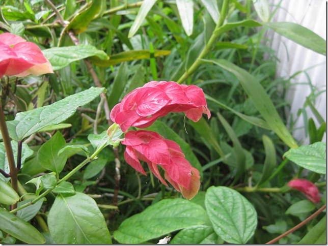 20120314_NC Tiga Végétation Fleurs_074
